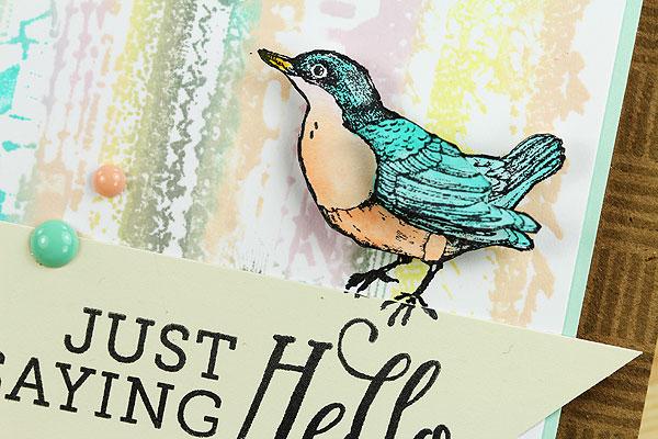 bird-closeup