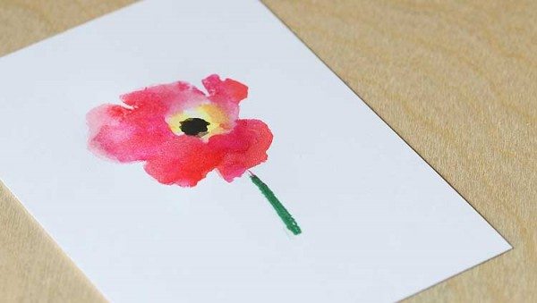 poppy-closeup