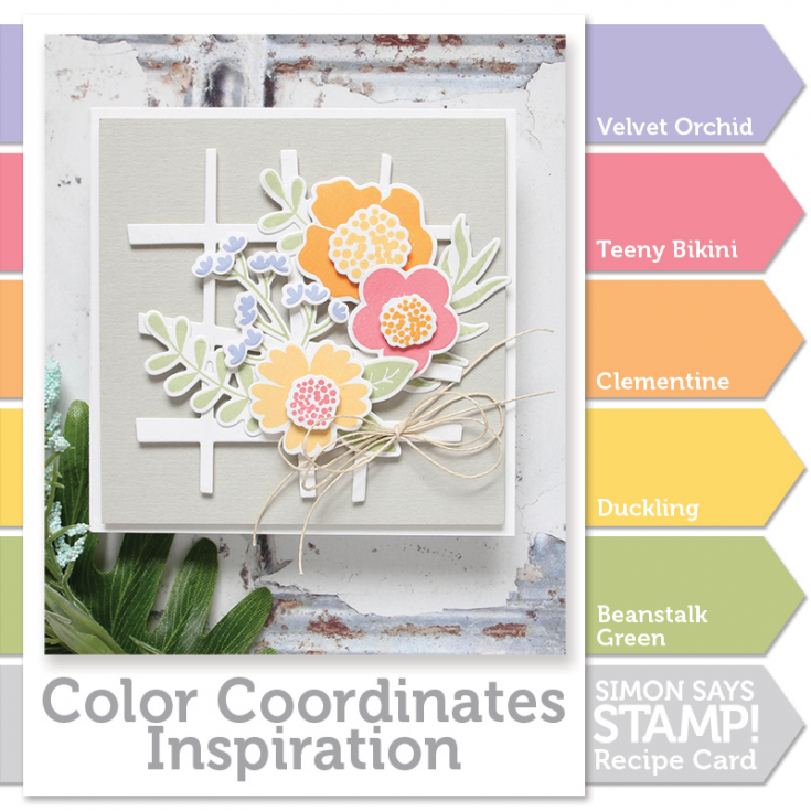 Color Coordinates recipe, Shari carroll